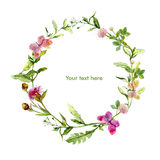 Wreath border frame with wild herbs, meadow flowers, butterflies. Watercolour Royalty Free Stock Photography