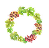 Wreath border with grape and  leaves. Watercolor circle frame Stock Photos