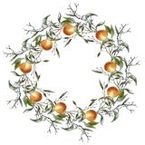 Wreath from a branch with oranges. Isolated on white background. Royalty Free Stock Photos