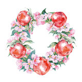 A wreath of branches of flowering Apple trees and red apples.Watercolor Vector Stock Images