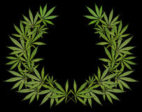 A wreath of cannabis on a black background Stock Photos