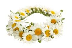 Wreath of  chamomiles Royalty Free Stock Photo