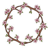 The wreath of cherry blossom branches. Sakura flowers. Royalty Free Stock Image