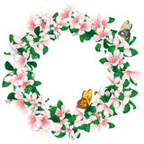 Wreath of cherry blossom  on white. Romantic flower frame. Royalty Free Stock Image