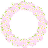 Wreath of cherry blossoms Royalty Free Stock Image