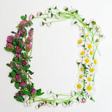 Wreath with clover and chamomile and daisy on white Stock Photography
