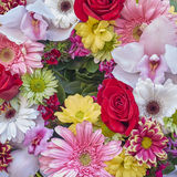 A wreath of colorful flowers Royalty Free Stock Photography