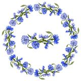 A wreath of cornflowers. Spring blue flowers on a white background royalty free illustration