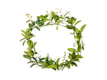 Wreath of creeper flower Royalty Free Stock Photos