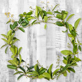 Wreath creeper on wooden background Royalty Free Stock Image