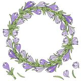 A wreath of crocuses. Vector illustration. Blue with green leave vector illustration