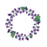 Wreath of currant isolate on white background. Watercolor simple romantic wreath of currant isolated on white background Stock Images