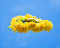 The wreath of dandelions Royalty Free Stock Image