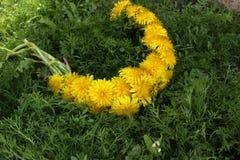 Wreath of dandelions Stock Image