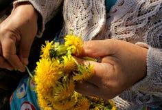 Wreath of dandelions Royalty Free Stock Image