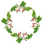Wreath from a dogrose Royalty Free Stock Photos
