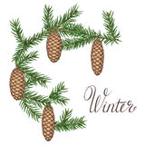Wreath with fir branches and cones. Detailed vintage illustration Stock Image