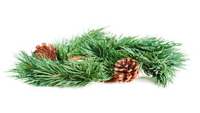 Wreath of fir branches isolated on white Royalty Free Stock Photo