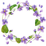 Wreath of forest violetand snd young green grass. Royalty Free Stock Photos