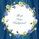 Wreath frame with wild flowers. Wreath frame with cornflowers, daisies and green leaves on blue background with tulle. Vector illustration Royalty Free Stock Photos