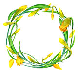 Wreath of garden flower snd young green grass. Stock Images
