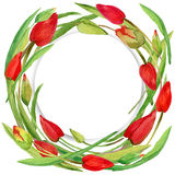 Wreath of Garden flower snd young green grass. Stock Image