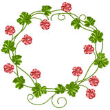 Wreath of geraniums Royalty Free Stock Photos