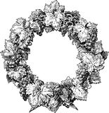 Wreath from a grapevine. Vector drawing of a wreath from a grapevine Royalty Free Stock Photo