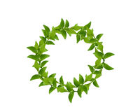 Wreath from Green leaves Royalty Free Stock Image