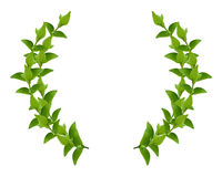 Wreath from Green leaves. Laurel Wreath made by fresh Green leaves  isolated on white Royalty Free Stock Photography