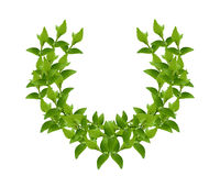 Wreath from Green leaves Stock Photography