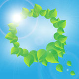 Wreath of green leaves on a sunny sky background Royalty Free Stock Photo
