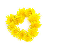 Wreath in heart shape from dandelion flowers isolated on white. Wreath in heart shape made from dandelion flowers isolated on a white background royalty free stock images