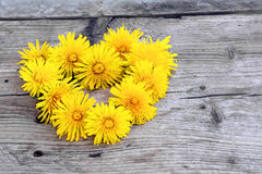 Wreath in heart shape made from dandelions on  weathered wood Royalty Free Stock Images