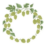 Wreath with hops. Floral composition with hop cones, leaves and branches. Isolated elements. Vintage hand drawn illustration in watercolor style Stock Photos