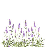 Wreath of lavender flowers Royalty Free Stock Images