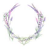 Wreath of lavender. Painted with watercolors on a white background , decoration postcard or invitation Stock Photography