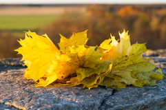 Wreath of maple autumn leaves on the stone surface Royalty Free Stock Photos