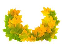 Wreath from maple leaves. Wreath from maple autumn yellow and green beautiful leaves on white background Royalty Free Stock Images