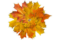 Wreath from maple slip Stock Images