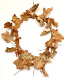wreath oak Royalty Free Stock Photos