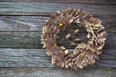 Wreath of oak leaves and acorns Royalty Free Stock Photos