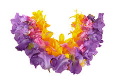 Wreath from petals. Wreath, set from petals, colors of an iris, a peony, a day lily Royalty Free Stock Image