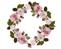 Wreath of pink roses on the white background. vector illustration
