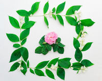 Wreath of pink tea rose and jasmine flowers Stock Photos