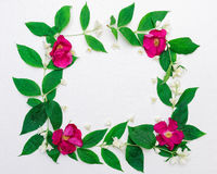 Wreath of pink tea roses and jasmine flowers and leaves Royalty Free Stock Photography