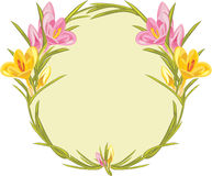 Wreath with pink and yellow crocuses Stock Photo