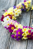 Wreath of primroses Stock Photos