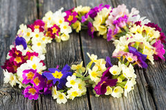 Wreath of primroses Royalty Free Stock Photo