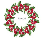 Wreath red rowan tree. Ornament twig of rowanberry or ashberry. decorative element circlet leaves and cluster of sorbus berry. Gar stock photos